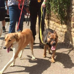 Penny does the Waendel Walk 2015
