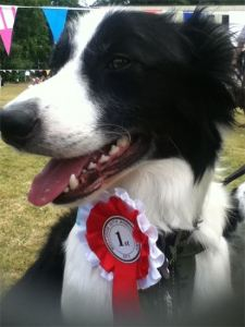 Wellidog Hector, Best Male Big Breed (You're lucky you can't see me. I was blubbering with pride) lol