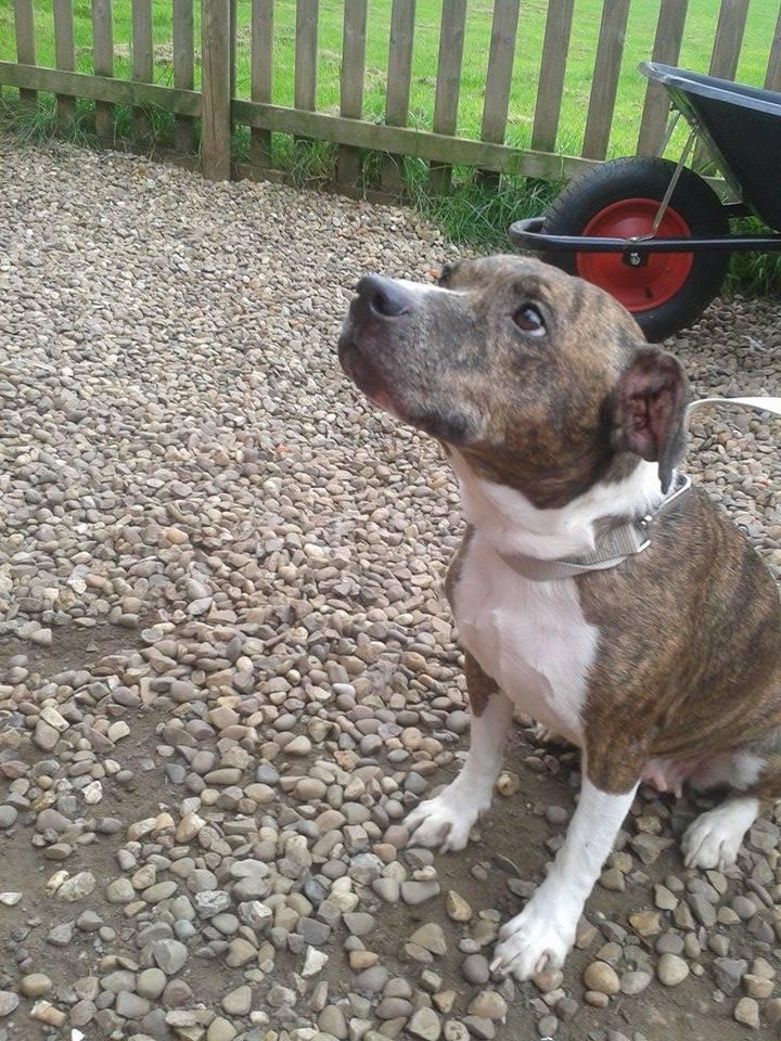 VALERIE - Needs an urgent foster home... Can you help?