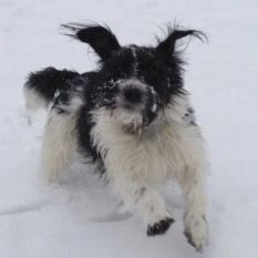"""SMUDGE (February 2013) """"Smudge, came to us in February 2013, much loved and has a fur-sister now too."""""""