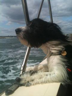 """SMUDGE (February 2013) Enjoying his first boat trip! """"Smudge, came to us in February 2013, much loved and has a fur-sister now too."""""""