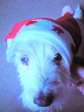 "WIDGET (2009) ""And he enjoyed dressing up! lol"""