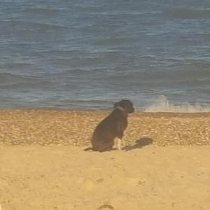 DIESEL enjoying his new life... and his first trip to the beach (even though he didn't think much to getting his paws wet lol)