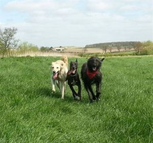 HILDA is now healthy, happy and loved with her new Mummy, Kennel Manager Naomi, Angel and Colin