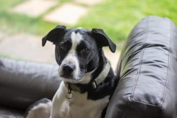 BLAKE (May 2012) Adopted 24th May 2012