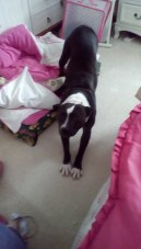 LOTTIE (was DOTTY) (December 2015) Now happy with her new family... WelliMum Jan