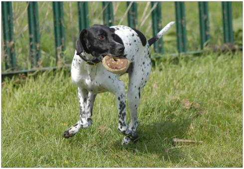 """MINNIE (2013) """"Adopted three years ago - she'll eat anything...."""" WelliMum and Wellidog Founder, Sue Allen"""