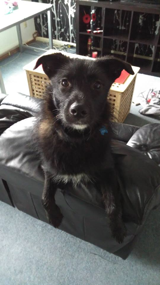 """PEPPER (December 2015) """"We rehomed Pepper Byrne Wright on 18 December 2015. Nearly 5 months on and she has become part of our hearts and we can't imagine life without her"""" WelliMum, Teresa"""