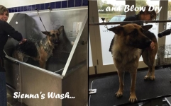 SIENNA gets a wash and blow dry...