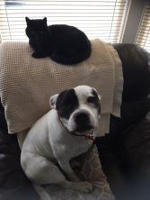 """STAN (December 2013) """"Stan my Man. Boxing Day 2013 ❤️"""" Happy Failed Foster WelliMum, Annie"""