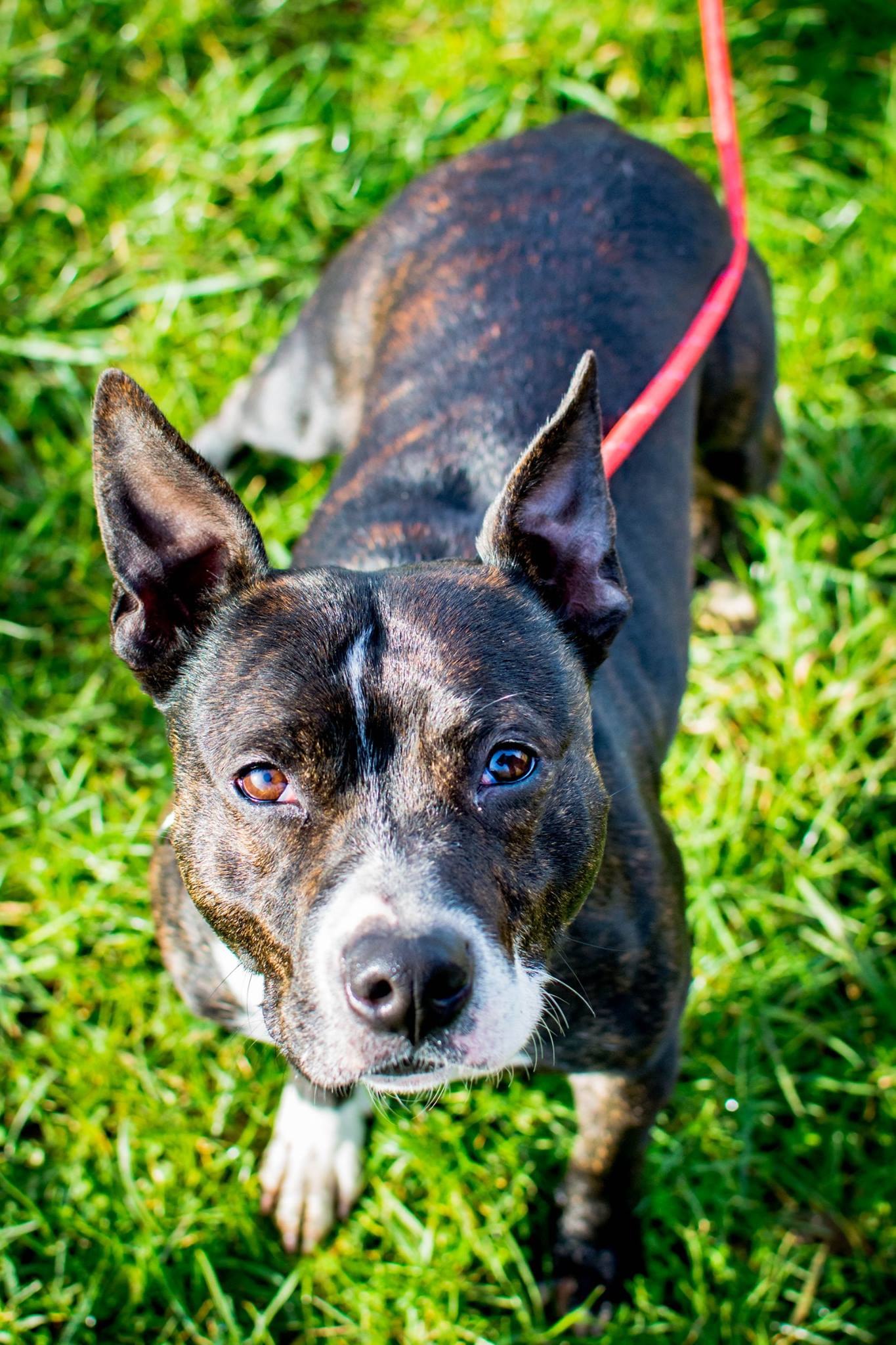 Could you give CONKER a loving home?