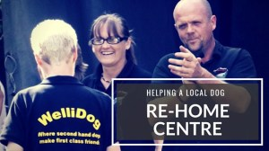 Helping-a-local-dog-rehome-centre