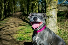 Beautiful BELLA is Looking for a Home
