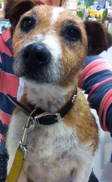 Wellingborough Dog Welfare Dog Show