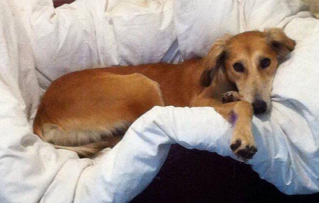 Prince is looking for love wellingborough dog welfare wellidog