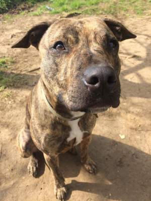 ALFIE is desperate to find a home...