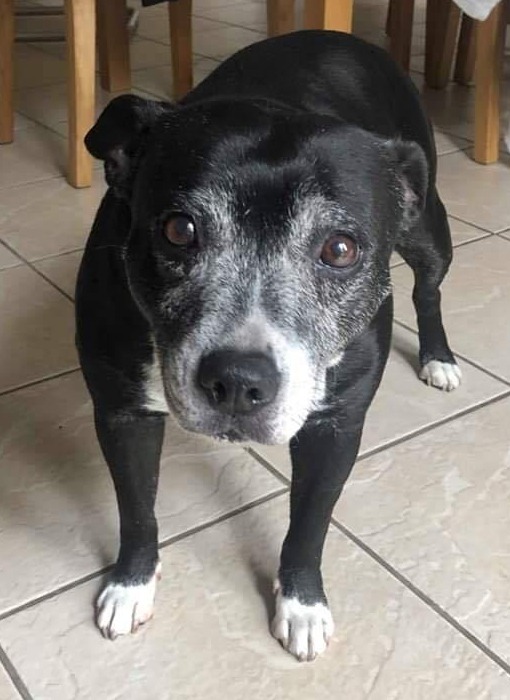 LADY. STAFFIE. ALMOST 10 YEARS OLD. LOOKING FOR A HOME. BITCH. NO CATS OR DOGS. OK WITH CHILDREN AGED 4+